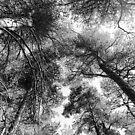 Look Up by Steve Falla