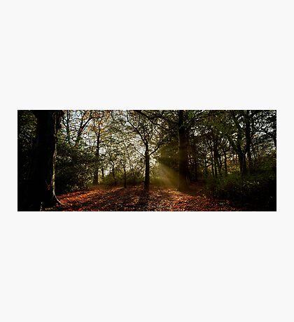 Misty Morning in Preston Park Photographic Print