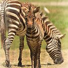 Hanging Out With Mom by Kathy Baccari