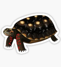 Red Footed Tortoise Sticker