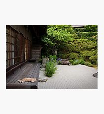 Zen garden cat Photographic Print
