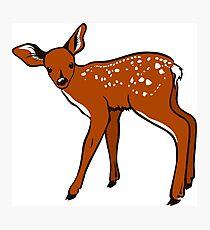 Animal deer fawn mammal Photographic Print