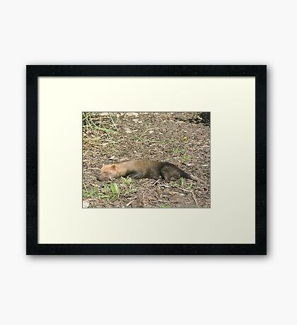 It's sooo hard.... Framed Print