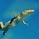 swimming Lizard by dedakota