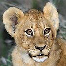 A cub of the Xiumungwe pride (i know how cute i am !) by Anthony Goldman