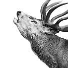 Red Deer Roar by George Wheelhouse