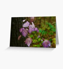 Lilac Leaves Greeting Card