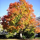 Glorious Tree by Shulie1