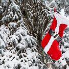 Santa Stocking by Bo Insogna