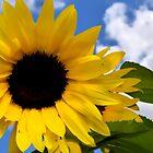 Sunflower Against The Sky by Ian Mooney
