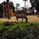 Zebra by Angela Lo Rosso