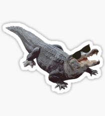 """Cool Gator"" Sticker"