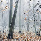 Dreamy Forest by Svetlana Sewell