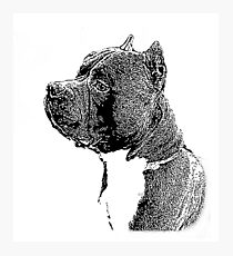 American Bully dog Photographic Print