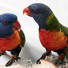 Parrot talk by LouD
