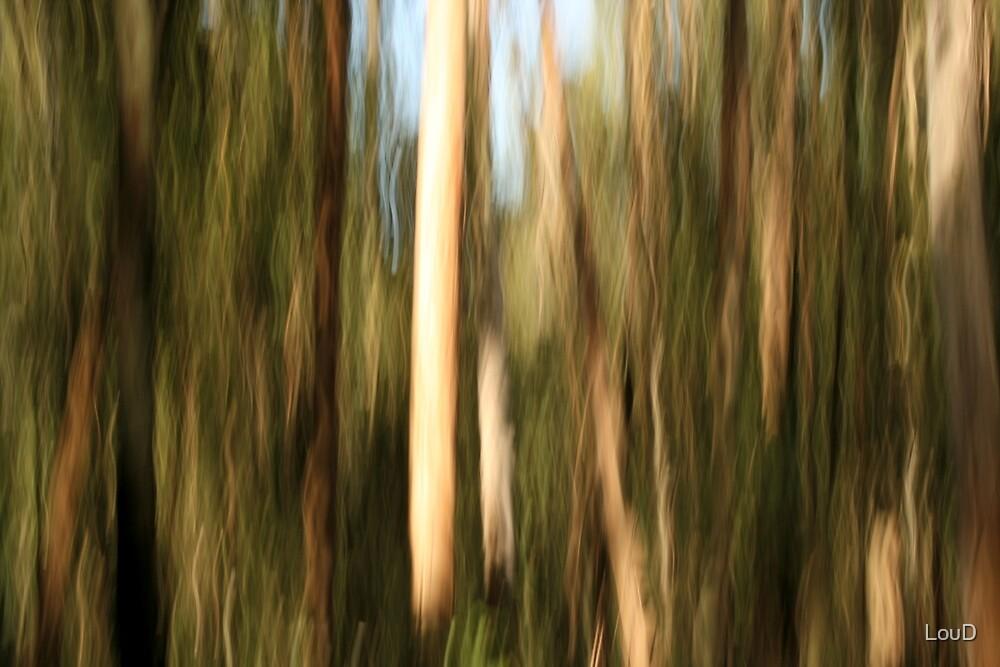 Bush spirits rising by LouD