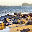 Lion Island from Ettalong Beach by George Petrovsky