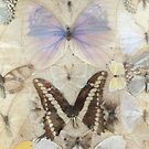 Antique Butterfly Original Version by himmstudios