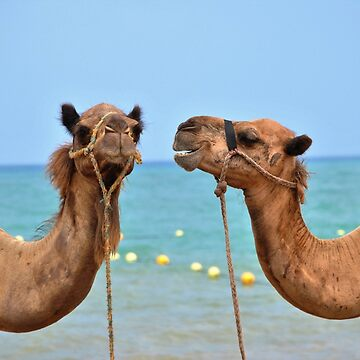 Beach camels by peggieprints