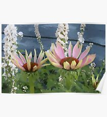 Echinacea Blossoms Poster