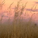 Wild Oats by Linda Lees