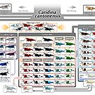 Caridina cantonensis Family Tree by rah-bop