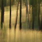 Light tricks in the meadow #01 by LouD