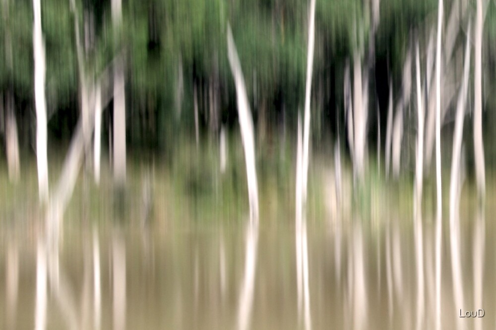Candlebark reflection by LouD