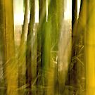 Bamboo impressions #01 by LouD