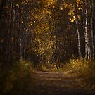The Golden Road by Bendinglife