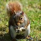 Hungry Squirrel by Sparowsong