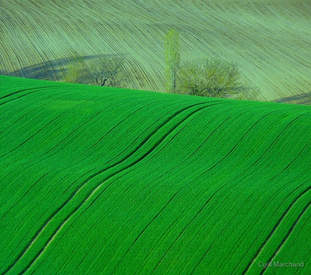 The Green Days by Cyril Marchand