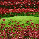 Rivers of Poppies by Sparowsong