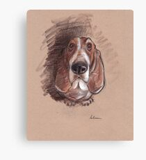 Lovable Basset Hound Looking For A Forever Home Canvas Print