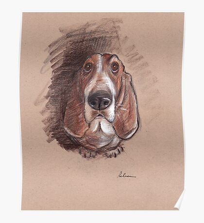 Lovable Basset Hound Looking For A Forever Home Poster