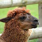 Fluffy Alpaca  by Sparowsong