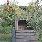 Apple Orchard by Melissa Delaney