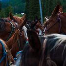 Band of Horses Feeding in Colorado  by Roschetzky