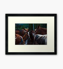 Band of Horses Feeding in Colorado  Framed Print