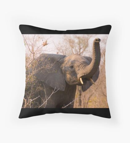 Elephant taking scent Throw Pillow