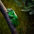Kleiner grüner Frosch von Cyberchamaeleon