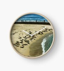 The Children's Pool Beach Seals in La Jolla California Clock