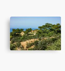 Torrey Pines - Unexpected Wilderness on the Southern California Coast Canvas Print