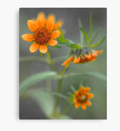 Wildflowers - Along The Edge Of The Stream Canvas Print