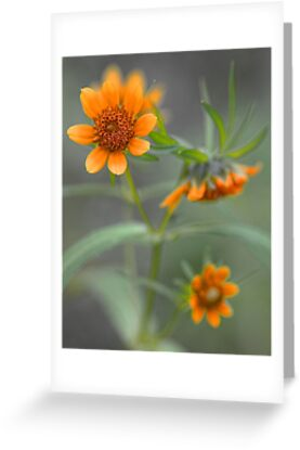 Wildflowers - Along The Edge Of The Stream by T.J. Martin