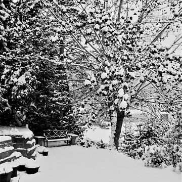 The Beginning of Winter in our Garden by mdohnalek
