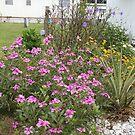 Florida Garden by revdrrenee
