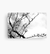 Naked Stick Canvas Print