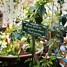 Garden philosophy by nadine henley
