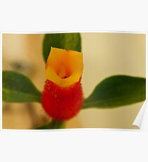 Candy Corn Flower Macro Poster